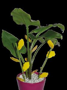 Pièges chromatiques englués floral
